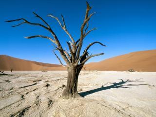 обои Засохшее дерево фото