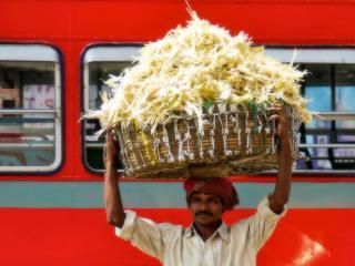 обои Носильщик сена из Индии фото
