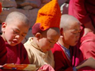 обои Маленькие ученики ламы фото