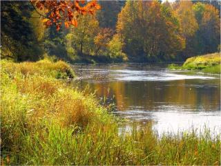 обои Осенний пруд и деревья фото