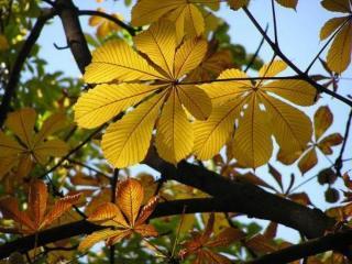 обои Пожелтевшие листья интересной формы фото