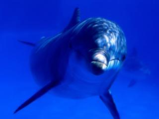 обои Весёлый дельфин в воде фото
