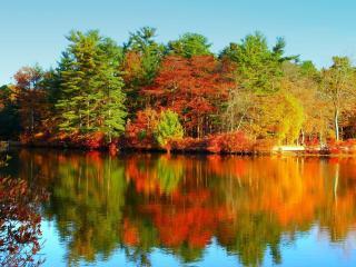 обои Золотая осень на пруду фото