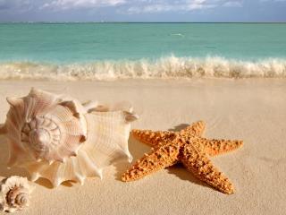обои Ракушки на берегу моря фото