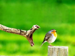 обои Последний кадр из жизни птички фото