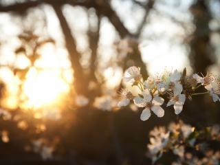 обои Сад в утреннем солнце фото