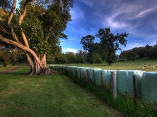обои Большое дерево у ограждения фото
