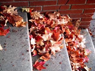 обои Красные осенние листья клена фото
