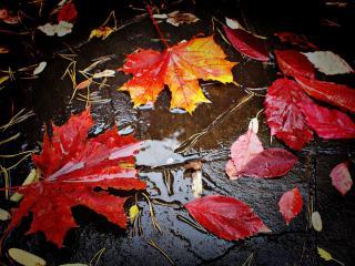 обои Разноцветные листья фото