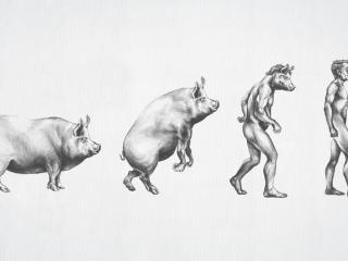 обои Эволюция мужчины фото