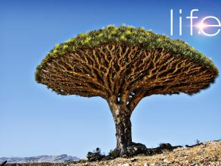 обои Живое дерево в пустыне фото