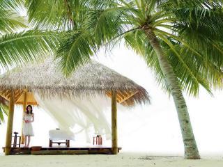 обои Бунгало под пальмами фото