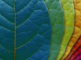 обои Листы разных цветовых оттенков фото
