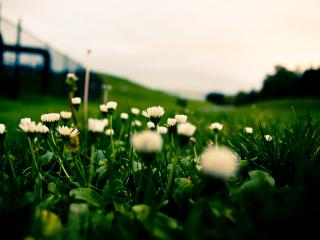 обои Травка,  газон,  цветы фото