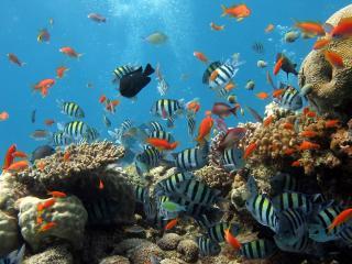 обои Яркое многообразие морского дна фото