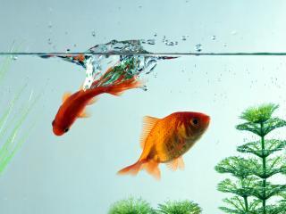обои Море,  рыбки фото