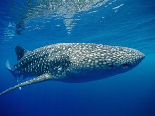 обои Море,  кит фото