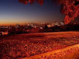 обои Ночной город осенняя листва фото