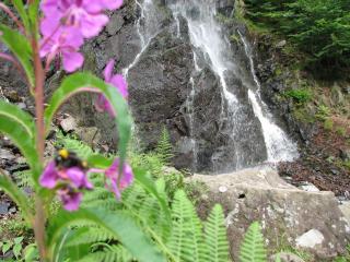 обои Шмель на цветке у водопада фото