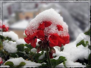 Картинки На Рабочий Стол Зимние Цветы