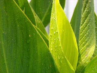 обои Влажные листья фото