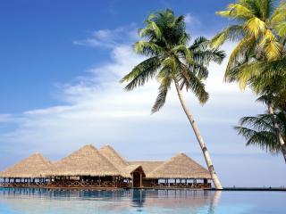 обои Курортный рай и пальмы фото