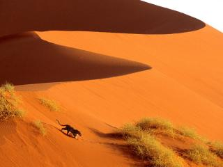 обои Crossing the Sand Dunes of Sossusvlei Park, Namibia, Africa фото