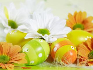 обои Яйца и цветы фото