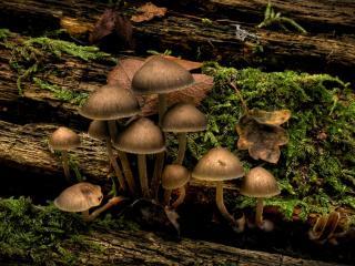обои Старое дерево,   грибы фото