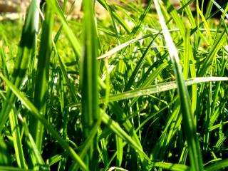 обои Свежая утренняя роса на зеленой траве фото