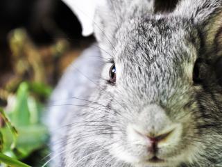 обои Серый кролик в зарослях фото