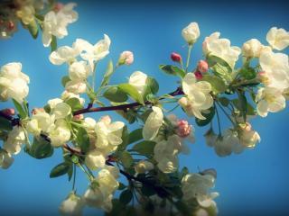 обои Весенний мотив фото