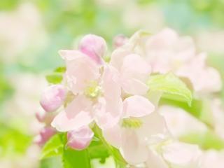 обои Нежные весенние цветы фото
