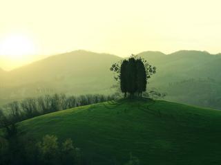 обои Три дерева на опушке фото