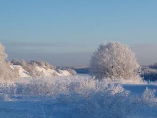обои Зимний день в перелеске фото