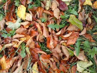 обои Осень в лете как трава в листьях фото