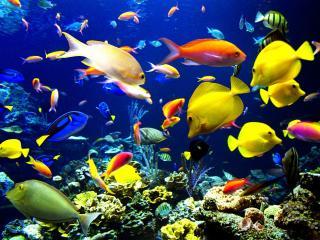 обои Пестрые жители коралловых рифов фото