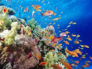 обои Цветастые жители океании фото