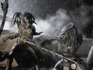 обои Чужой против Хищника под дождем фото