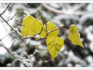 обои Последние листья фото