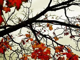 обои Коричневые листья на ветках фото