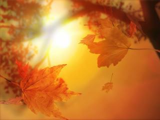 обои Желтые осенние листья на закате фото