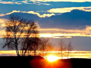 обои Солнце заходит за весенними деревьями фото