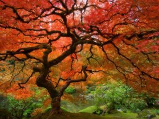 обои Яркое цветное дерево фото