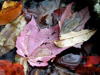 обои Умирающие листья на земле фото