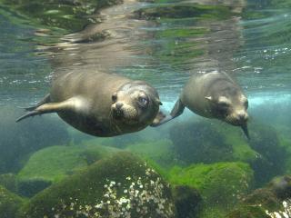 обои Романтика под водой фото