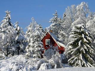 обои Домик в снежном лесу фото
