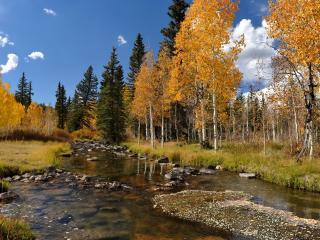 обои Осенний пейзаж и ручей фото