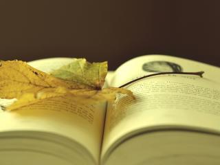 обои Открытая Книга,   осенний лист фото