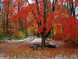 обои Конц осени - красная листва фото